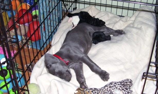 dd096b9010ce Κλουβί και Σκύλος! Γιατί Είναι Απαραίτητο και Όχι Φυλακή!