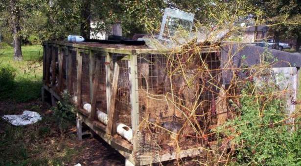 www.dogpark.gr